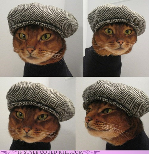 best of the week,Cats,cool accessories,hats