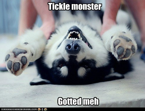 awesome,happy dog,husky,laugh,laughing,smile,smiles,smiling,tickle,tickle monster,tickles