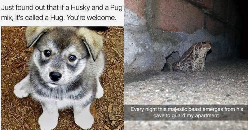 27 Amusing Animal Memes That Are Too Cute For This World Memebase Funny Memes,Pale Lavender Lavender Bedroom Walls