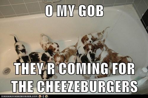 Cheezburger Image 5879707648