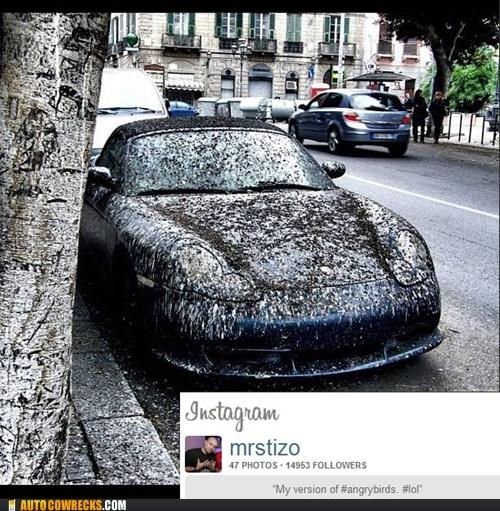 angry birds bird poop car instagram poop - 5879779072
