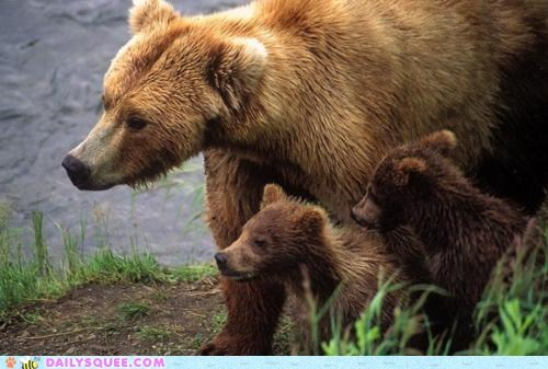 bears cubs explore family grass - 5879899136