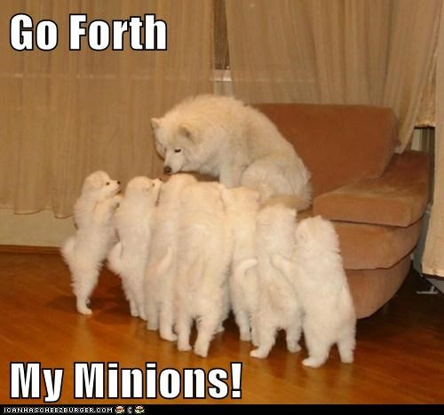 american eskimo dog,dad,minion,minions,mom,parent,puppies
