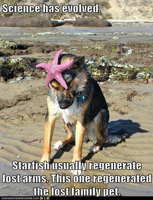 beach evolution german shepherd regeneration science starfish - 5880475904
