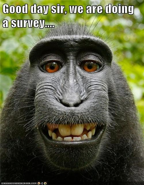ape,monkey,survey,teeth