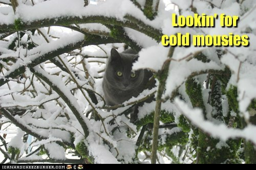 Lookin' for cold mousies