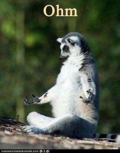 caption lemur lemurs meditation ohm