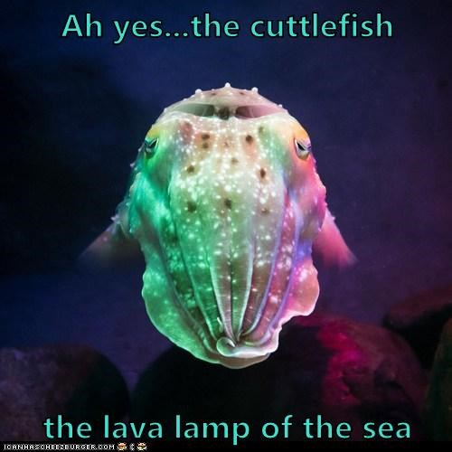 Ah yes...the cuttlefish the lava lamp of the sea