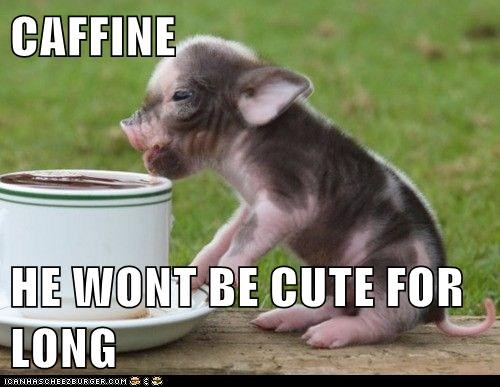 adorable caffeine coffee pig piglet - 5881488640