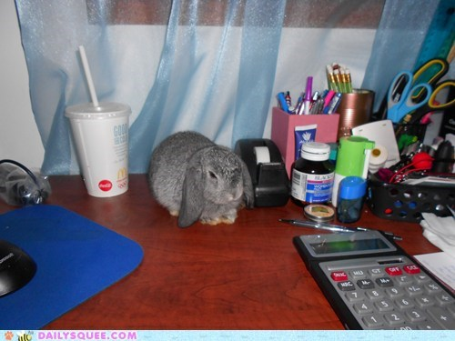 bunny,calculator,desk,happy bunday,reader squees,stapler