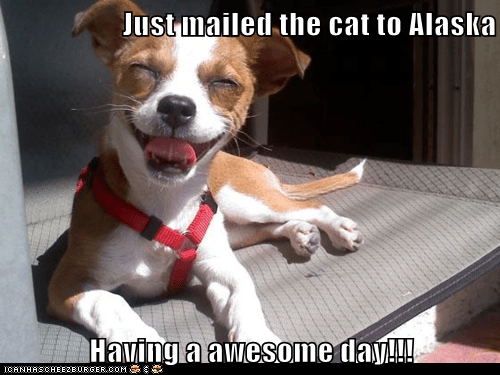 alaska,cat,haha,happy,jack russell terrier,mail,mailed the cat,post office,smiles,smiling