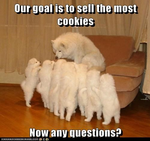american eskimo dog,caption,cookies,dogs,family,fundraising,girl scouts,mom,puppies,questions,scouts,troop leader