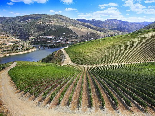 europe,getaways,green,hills,portugal,river,vineyard,wine