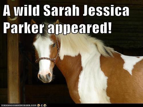 horse,no,sarah jessica parker