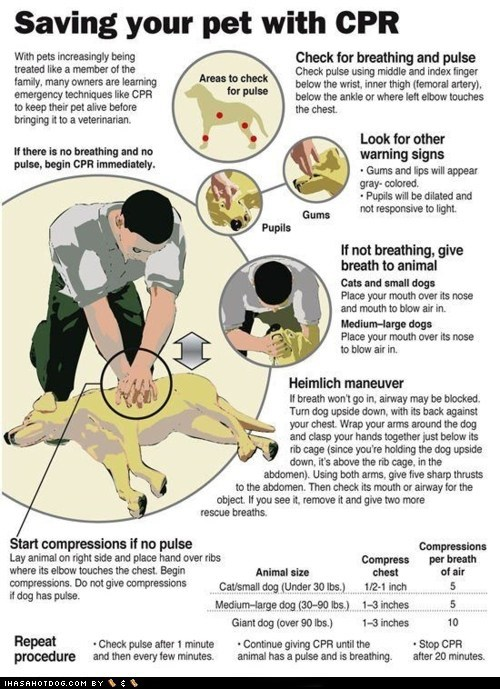 all breeds best of the week cpr dog cpr dogs first aid Hall of Fame healthy How To info infographic information informative mixed breed red cross safety - 5882916352