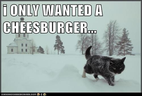 Cheezburger Image 5882979072