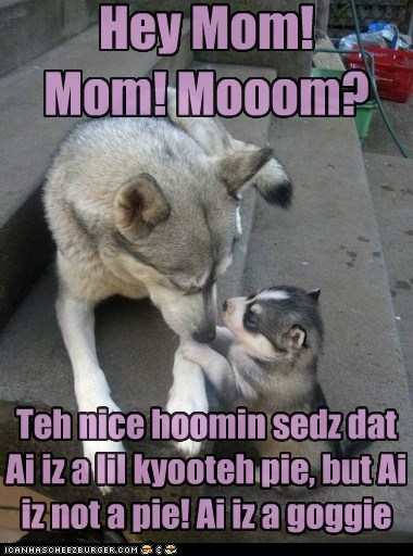 adorable,cutie pie,husky,kid,mom,puppy