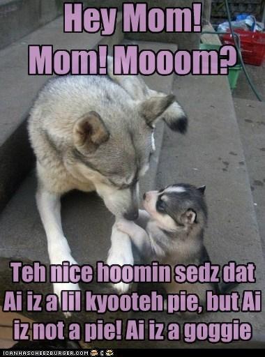 adorable cutie pie husky kid mom puppy - 5882985984