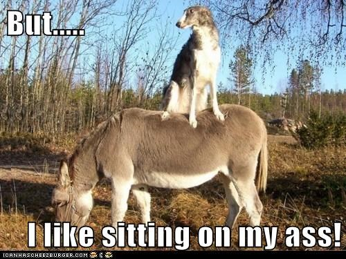 ass,donkey,russian wolfhound,sitting on my ass