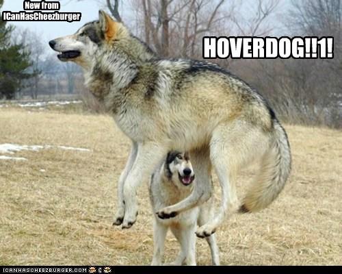 New from ICanHasCheezburger HOVERDOG!!1!