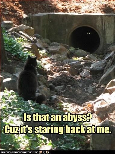 back caption cat Cats dark eyes question Staring - 5883270144