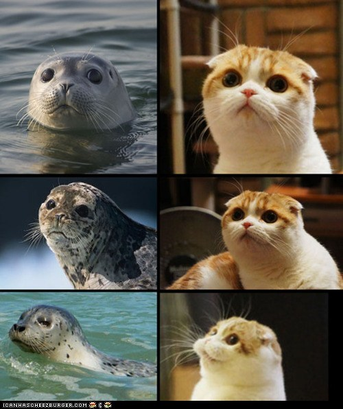 Cats,cute,look alikes,multipanel,seals,similar