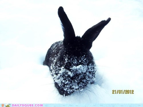 black bunny cold happy bunday play snow