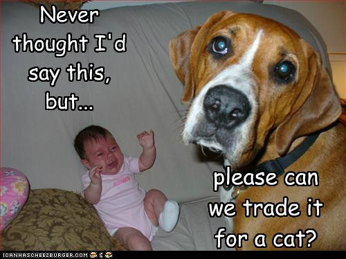 Babies,baby,can we get a cat,caption,cat,Cats,do not want,dogs,family,human,infant,kids,mixed breed,no,please,smells,smelly,stinky,trade,trade in,trade it for a cat,unhappy dog,whatbreed