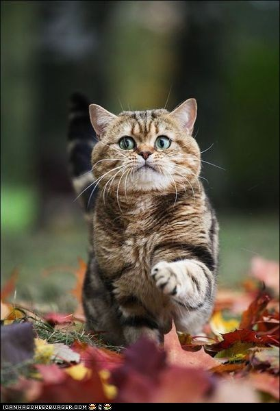 cyoot kitteh of teh day,expression,eyes,leaf,leaves,paws,scared