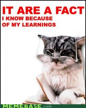 fact kitten learnings Memes - 5884706048