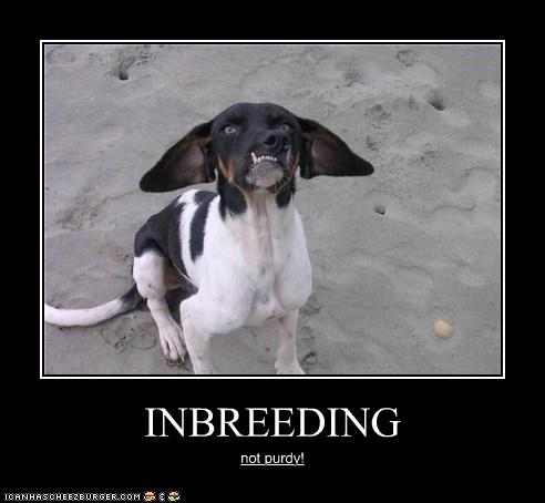INBREEDING not purdy!