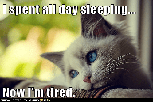 Cats complaining first world cat problems First World Problems Hall of Fame Memes sleep sleeping tired whining - 5885532928
