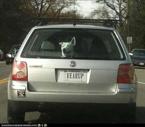 cars,coincidence,cute,Does What It Says,dogs,ears,one ear up,vanity plate