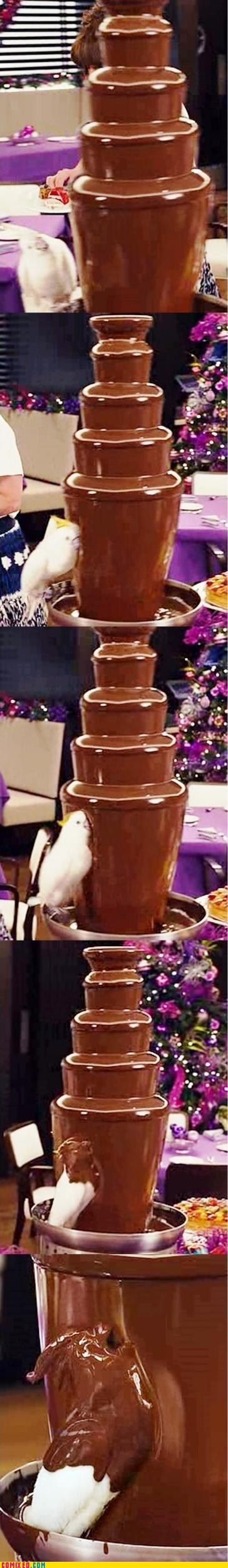 animals,best of week,bird,chocolate,chocolate fountain,funny,Memes,omg,pets