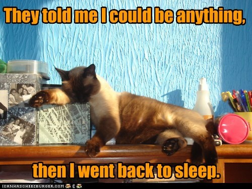 anything back be best of the week could Hall of Fame me meme response siamese sleep sleeping told went - 5885737984