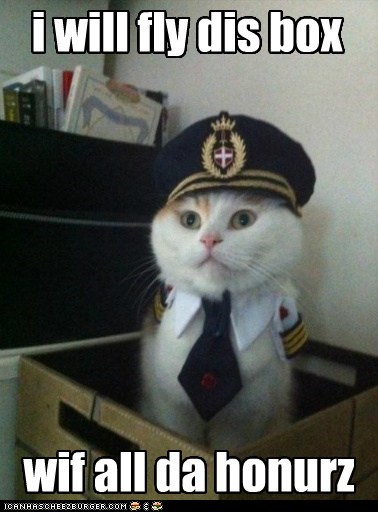 distingwish pilot kitteh