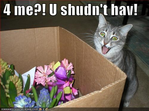 boxes,excited,flowers,gifts,grey,lolcats