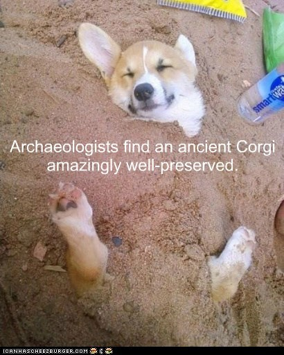 archeology,beach,caption,corgi,corgis,dogs,funny,preserved,sand