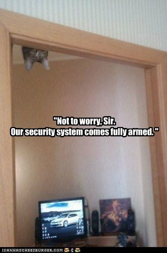 armed,best of the week,cat,fully,Hall of Fame,protection,security,system