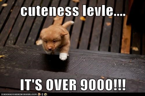 cute cuteness level over 9000 puppy run running whatbreed - 5887668736