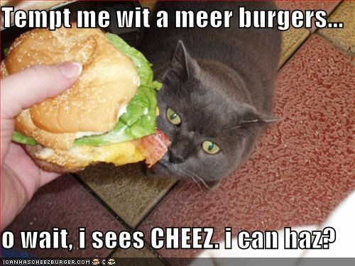 Cheezburger Image 588807424