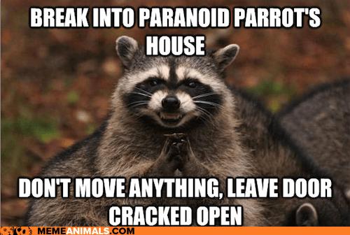 evil Memes paranoid Paranoid Parrot parrots raccoons tricks trolling - 5888319488