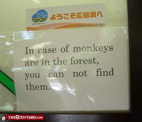 Forest Japan monkey monkeys - 5888438528