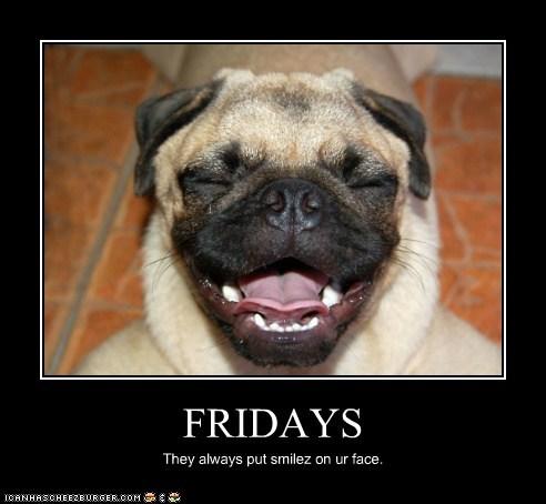 demotivational dogs funny pug - 5888575488