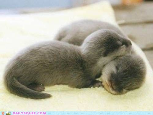 Babies cuddle otters sleep snuggle squee - 5888726784