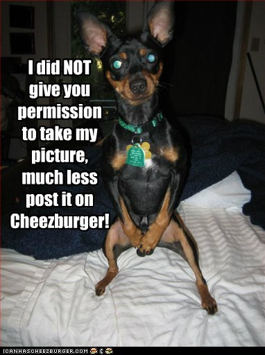 Cheezburger Image 5888939008