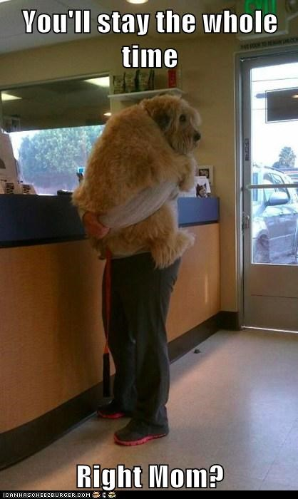 Vertical picture of a dog jumping and holding onto his human at the veterinarians office with the words 'You'll stay the whole time, right mom?' Captioned.