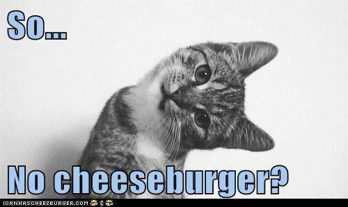 Cheezburger Image 5889507328