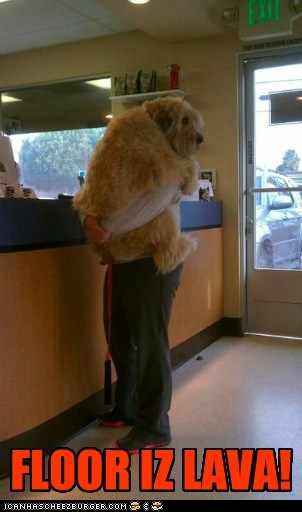 dogs floor is lava hug hugs lava scared vets whatbreed whoa - 5889511680