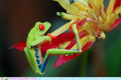 colorful,Flower,frog,red eyed tree frog